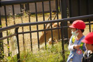 大型バスで円山動物園に行きました